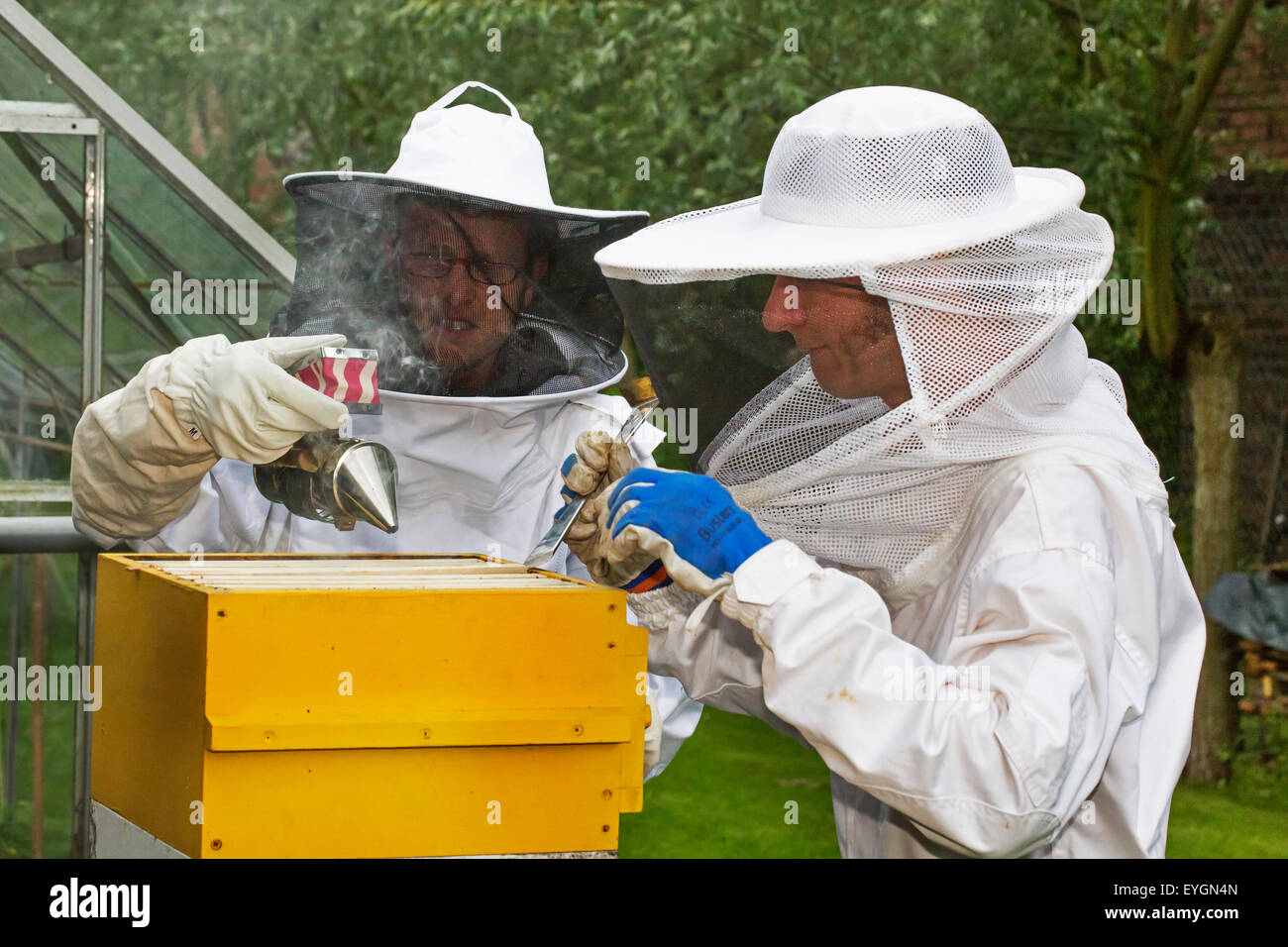Two beekeepers in protective clothing with bee smoker open beehive to inspect combs from honey bees (Apis mellifera) - Stock Image