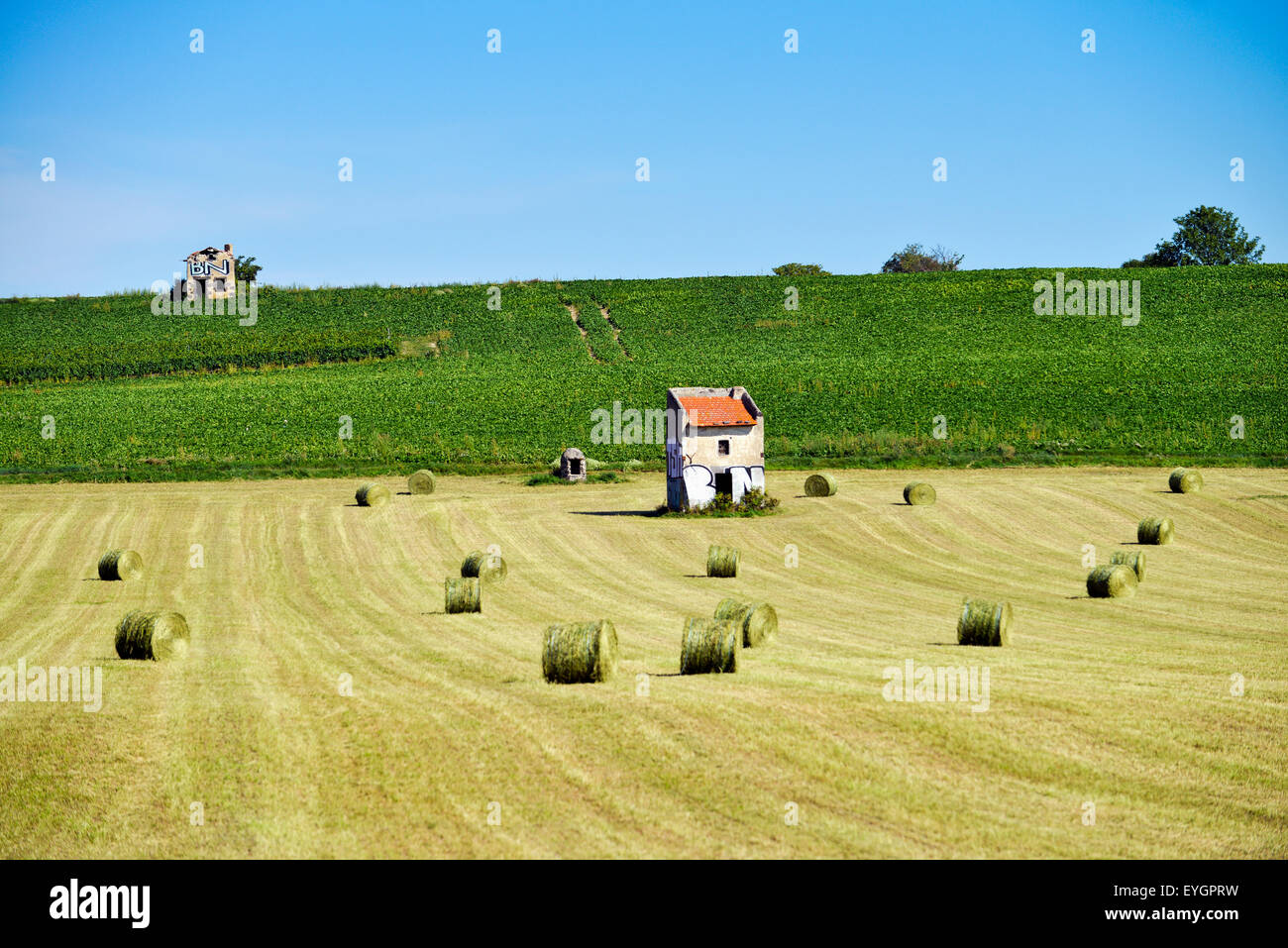Fields with hay and cornfield (Zea mays)  in France Europe - Stock Image