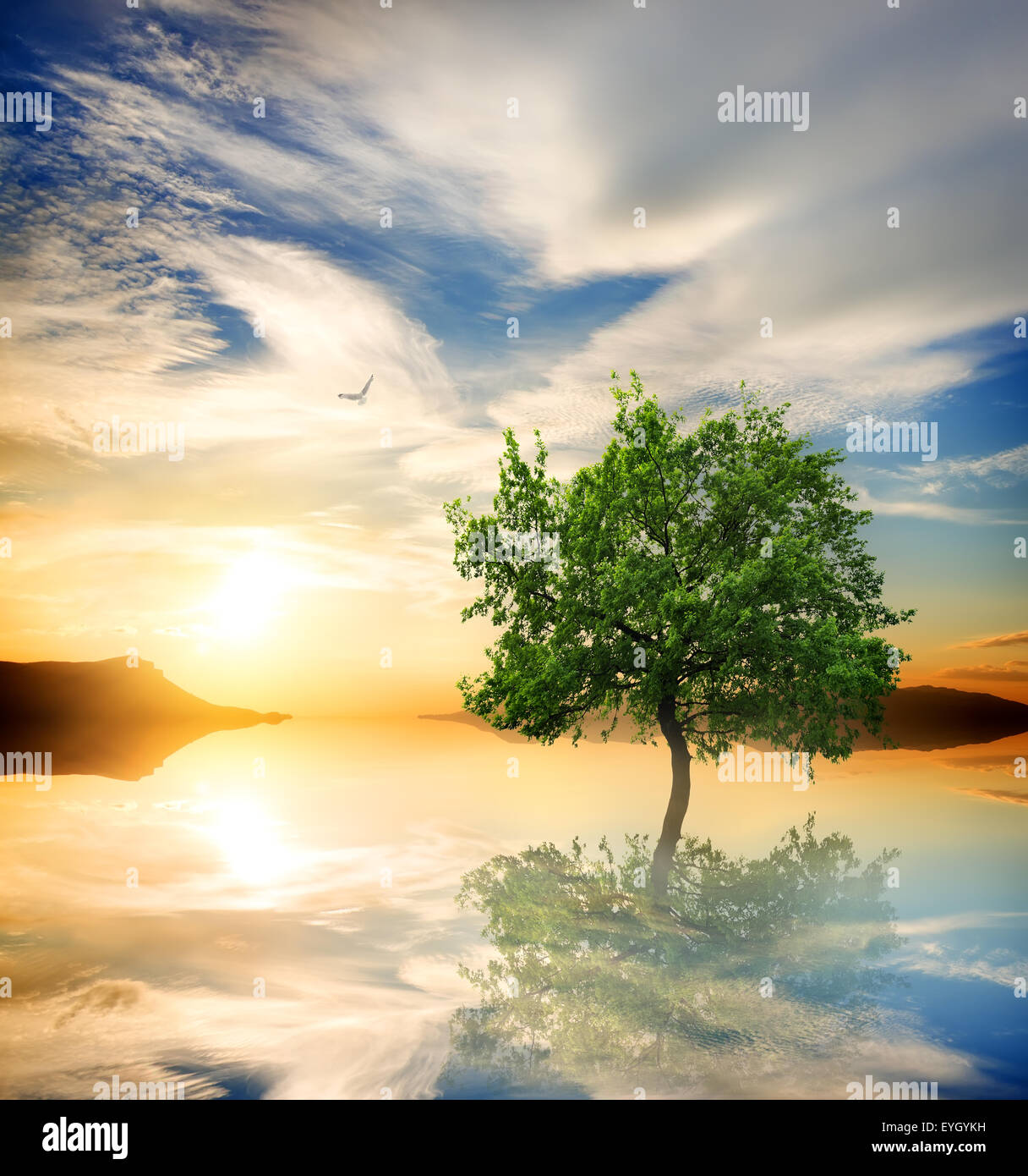 Green tree in the ocean at sunset - Stock Image