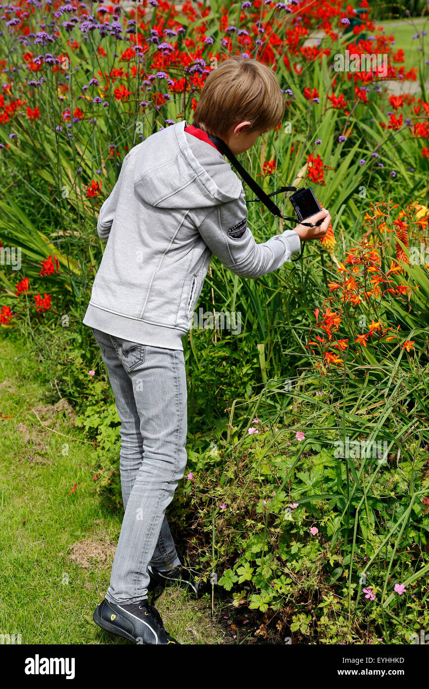 young boy takes picture of flowers in garden - Stock Image