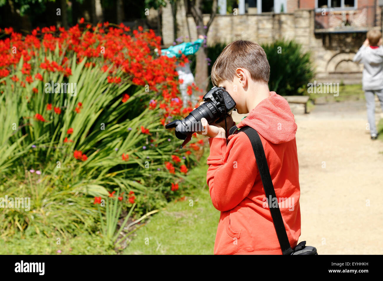 young boy taking a photograph of flowers in garden - Stock Image