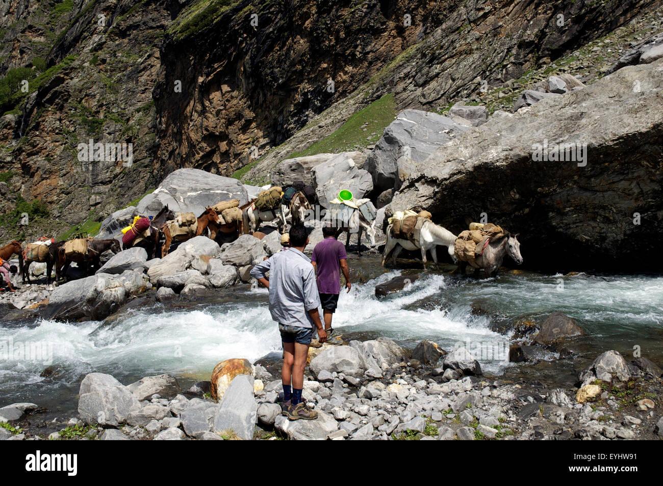 Pack mules negotiate a glacial river in Himachal Pradesh, India - Stock Image