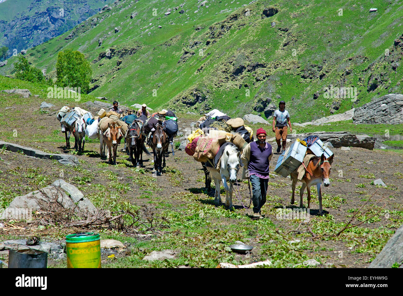 A team of pack mules in the Kulu region of Himachal Pradesh, India - Stock Image