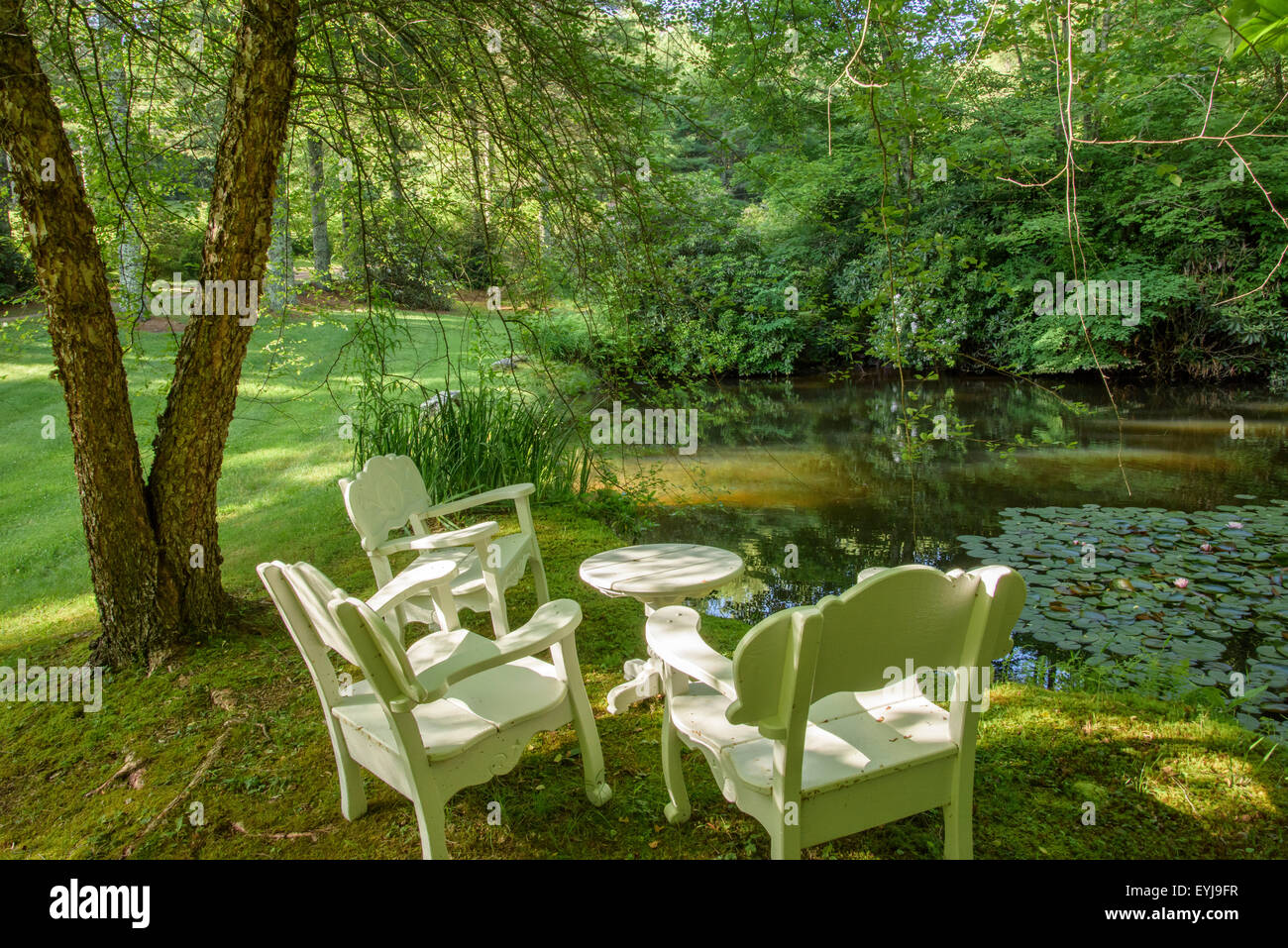 Serene coy pond in wooded landscape - Stock Image