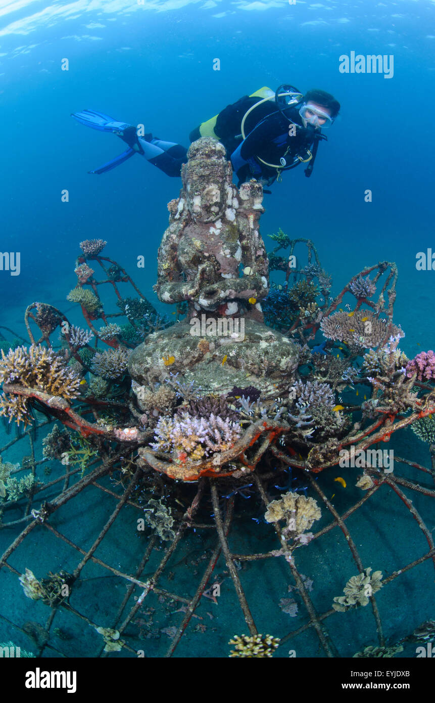 A diver looking at the goddess statue at the Biorock project in Pemuteran, Bali, Indonesia, Pacific Ocean - Stock Image