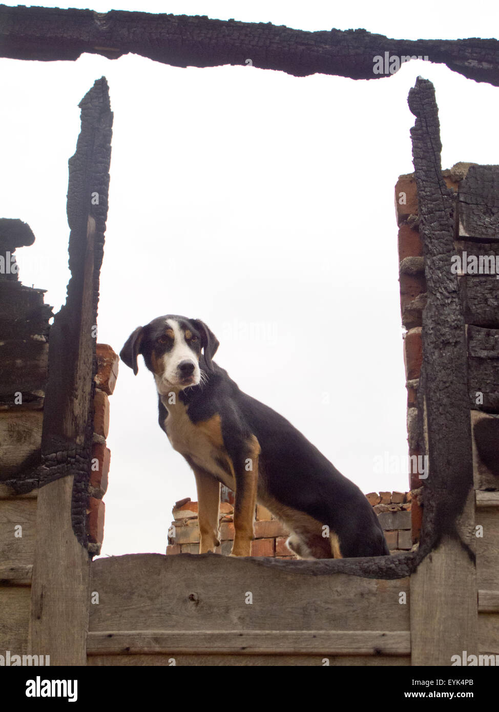 dog watcher stock photo 85858035 alamy