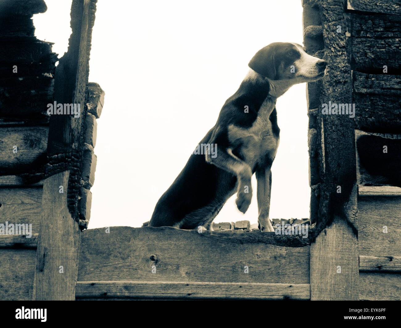 dog watcher stock photo 85859607 alamy