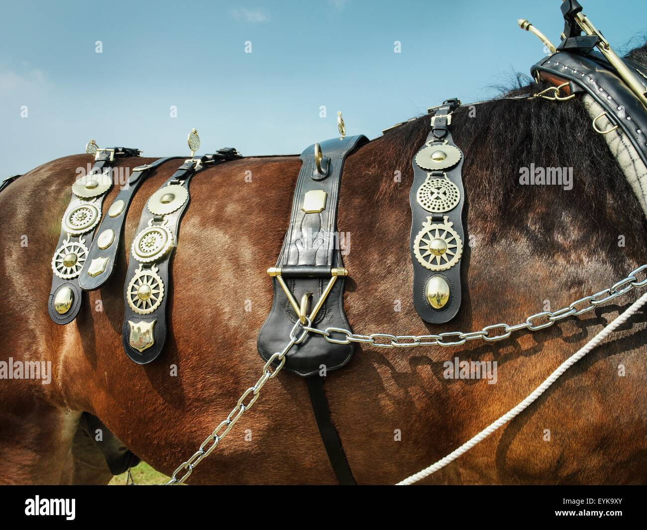 Horse Brass High Resolution Stock Photography And Images Alamy