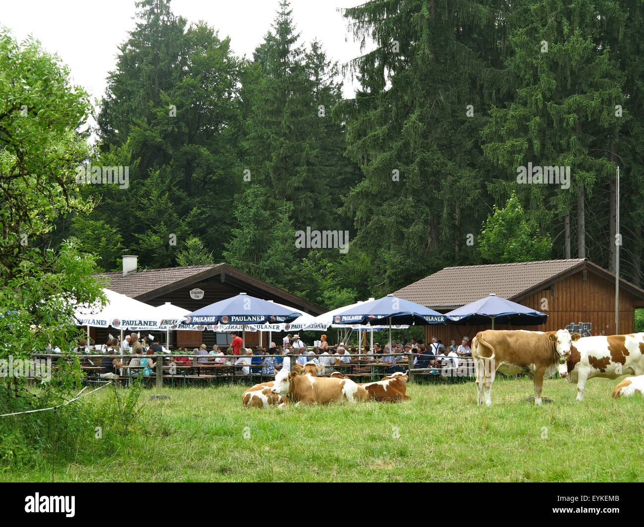 Deutschland, Oberbayern, Königsdorfer Alm bei Geretsried, - Stock Image
