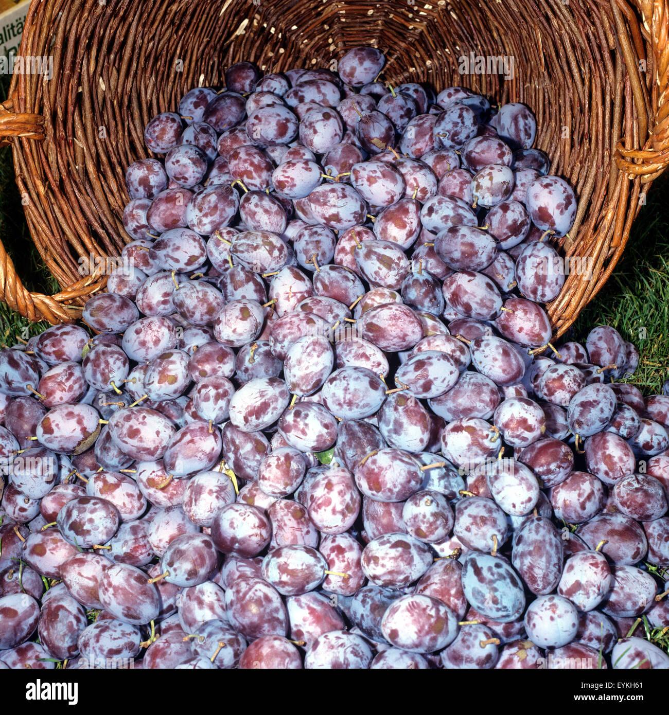 Pflaumen, Prunus, domestica, Frucht, - Stock Image
