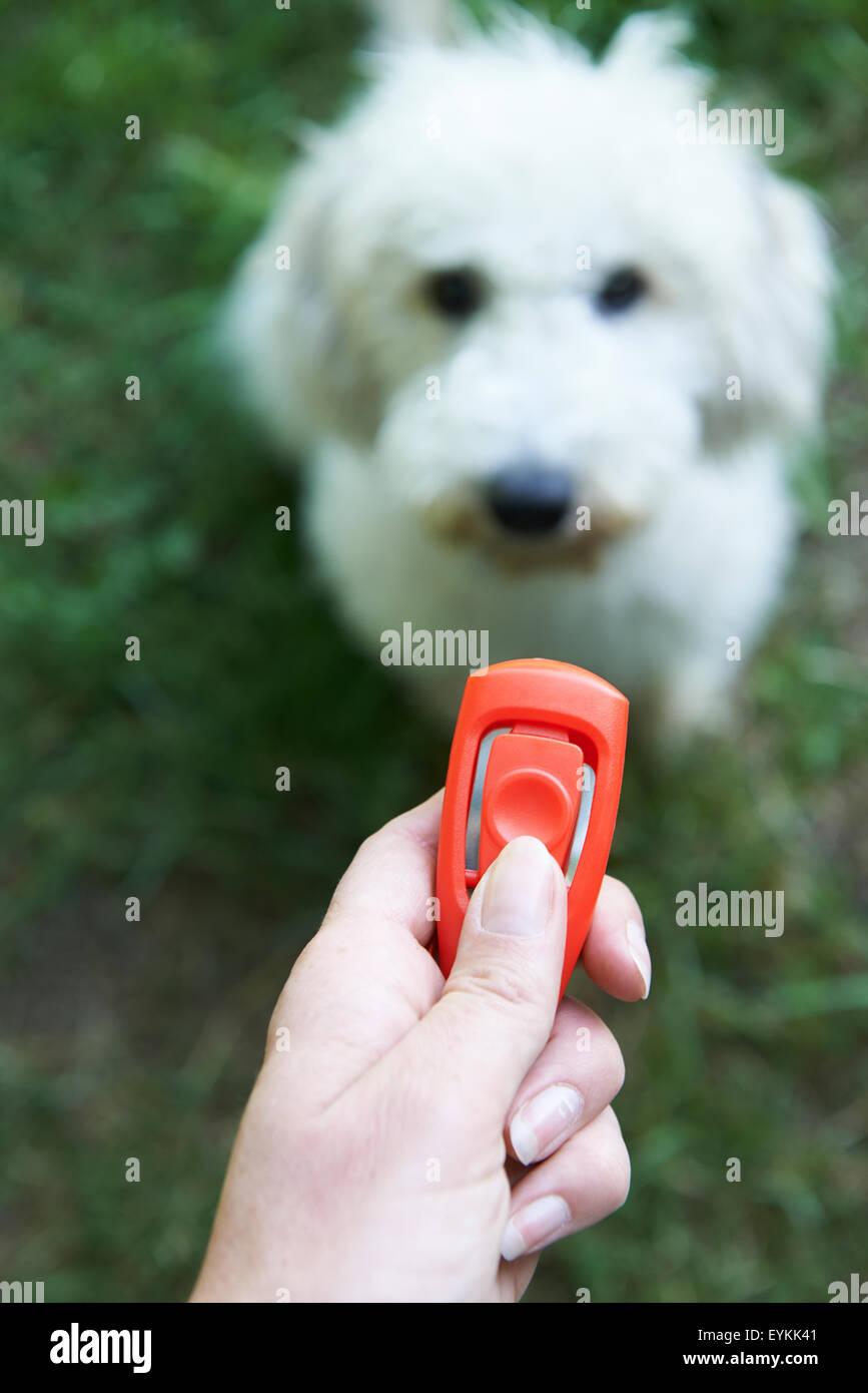 Pet Owner Training Dog Using Clicker - Stock Image