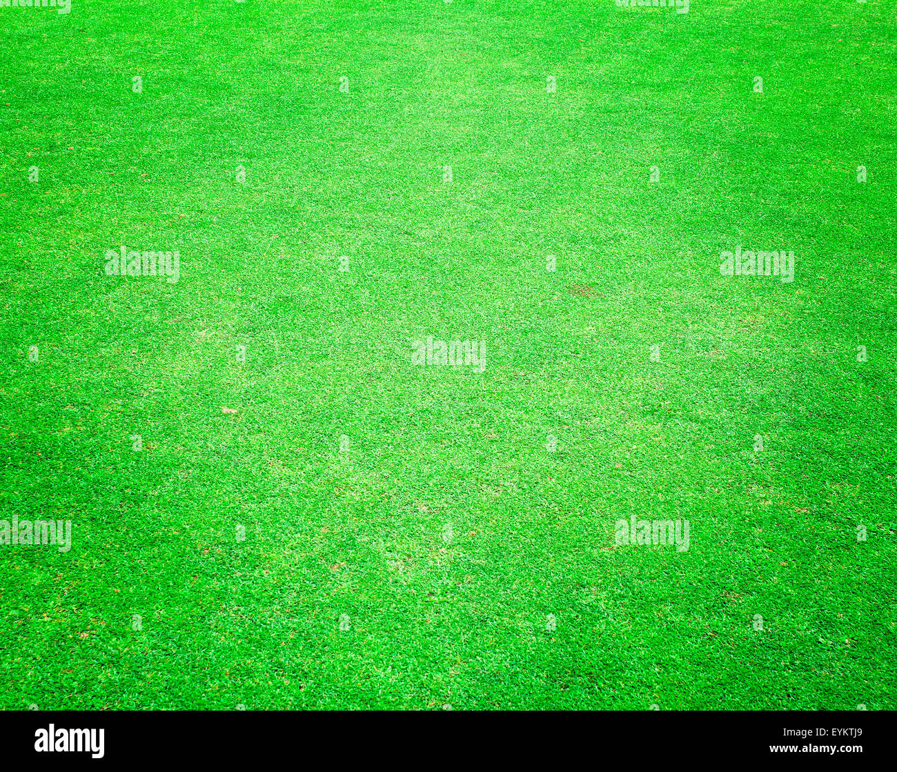 Golf Green Grass background pattern background texture. - Stock Image