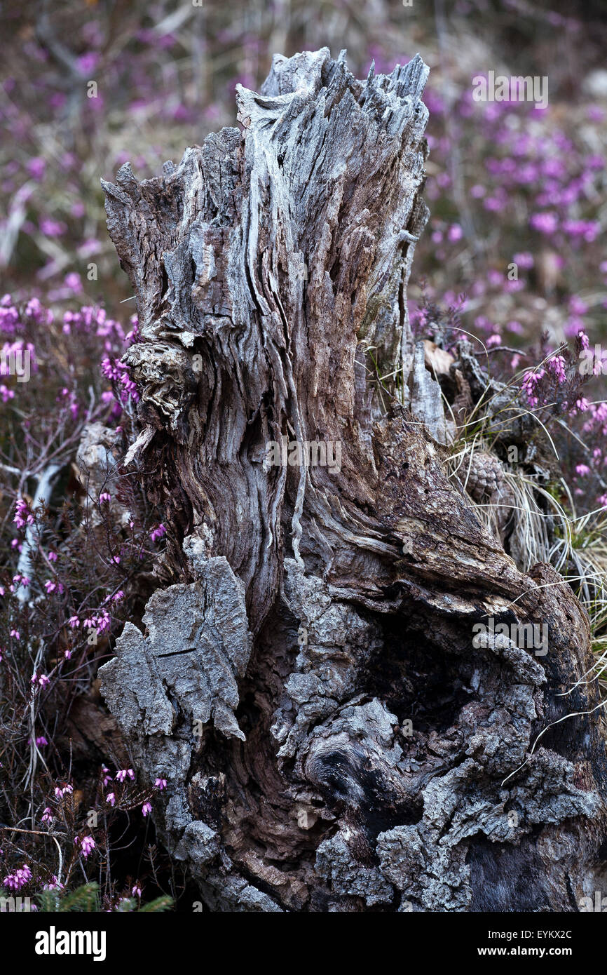 Droll rhizome in detail, - Stock Image