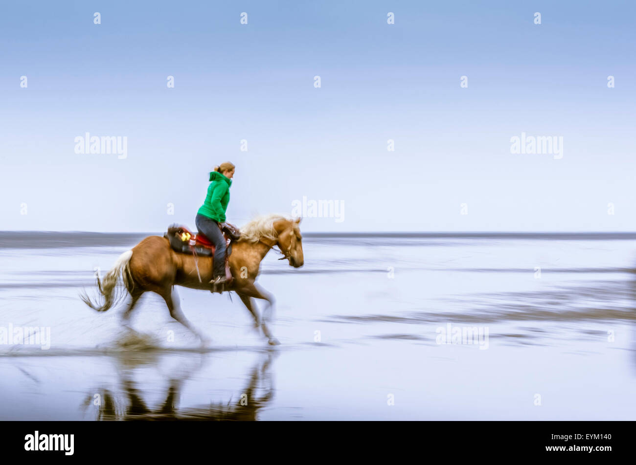 Germany, low things, new plant, Cuxhaven, wadden sea, mud flats, woman, horse, - Stock Image