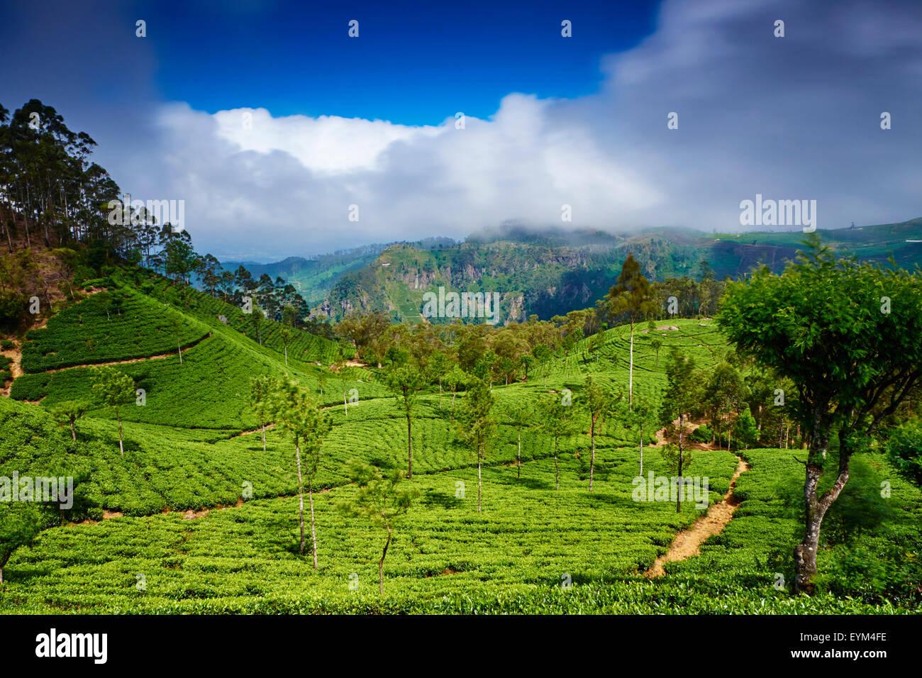 Sri Lanka, Ceylon, Central Province, Haputale, tea plantation in the Highlands, Lipton's seat - Stock Image