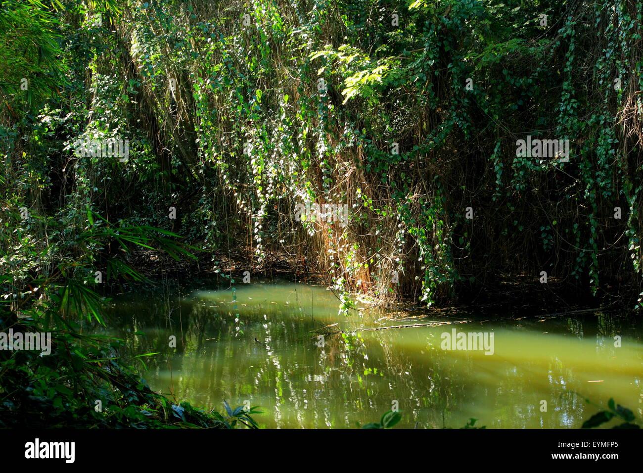 wetland ecosystem  Kerala, India - Stock Image