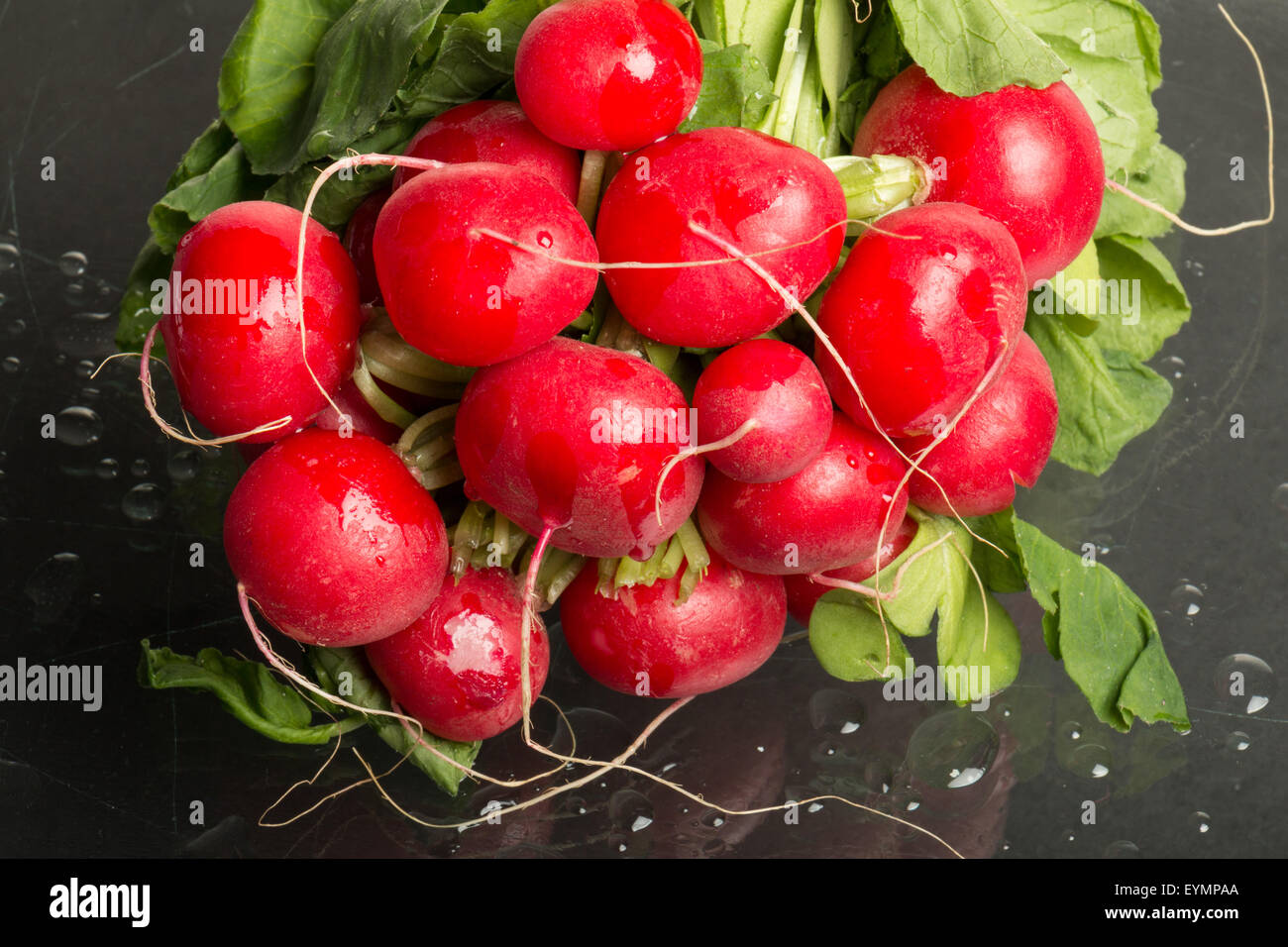 Bundle of red radishes on display, studio-shot , full - Stock Image