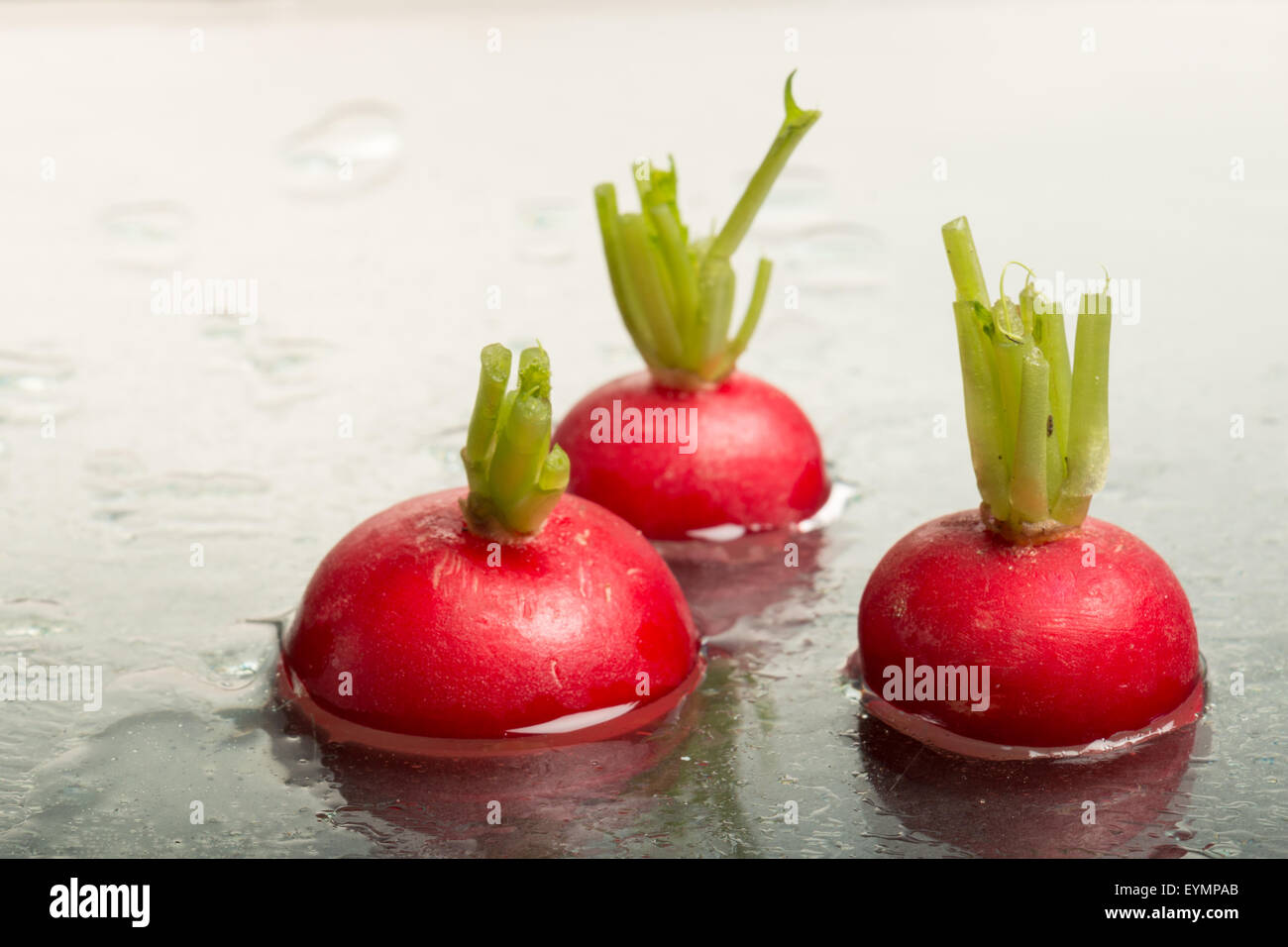 Tops of three red radishes on display, studio-shot - Stock Image