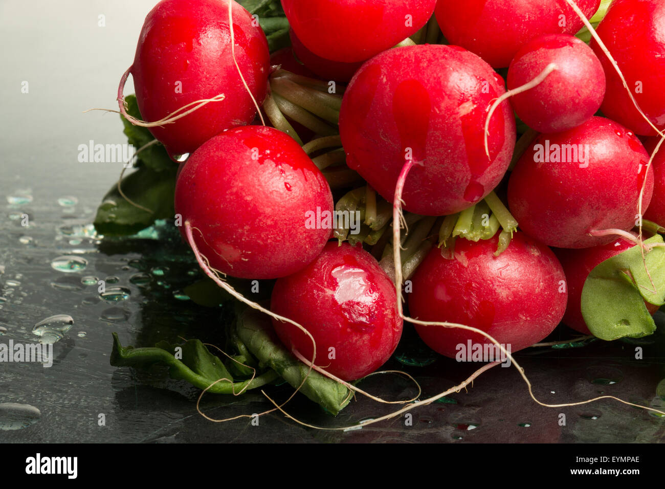 Bundle of red radishes on display, studio-shot, close-up - Stock Image