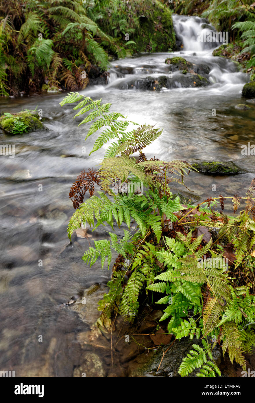 River flowing into Derwentwater in the Lake District National Park, Cumbria, England Stock Photo
