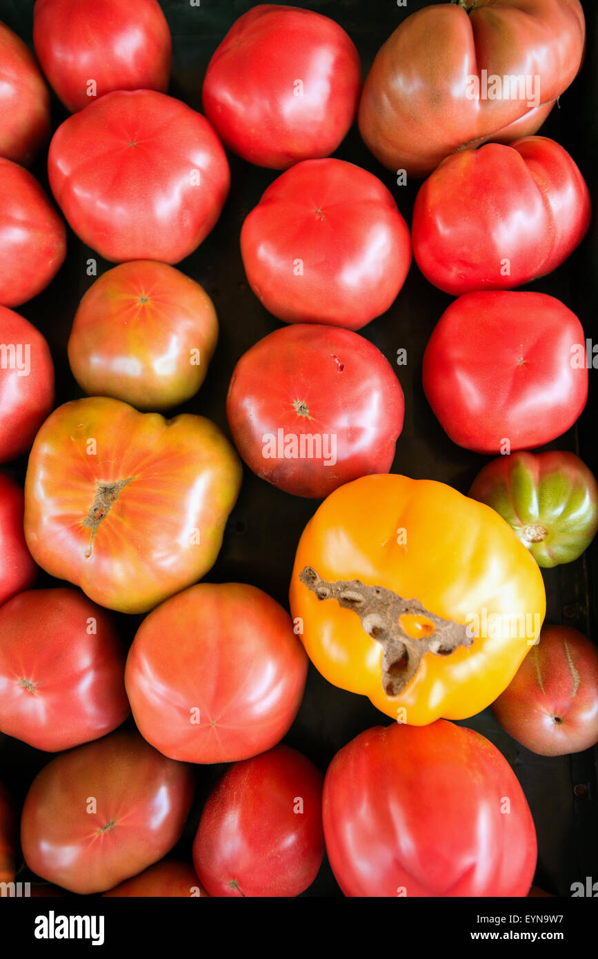 Tomato varieties in Kensington Food Barn New Hampshire USA - Stock Image