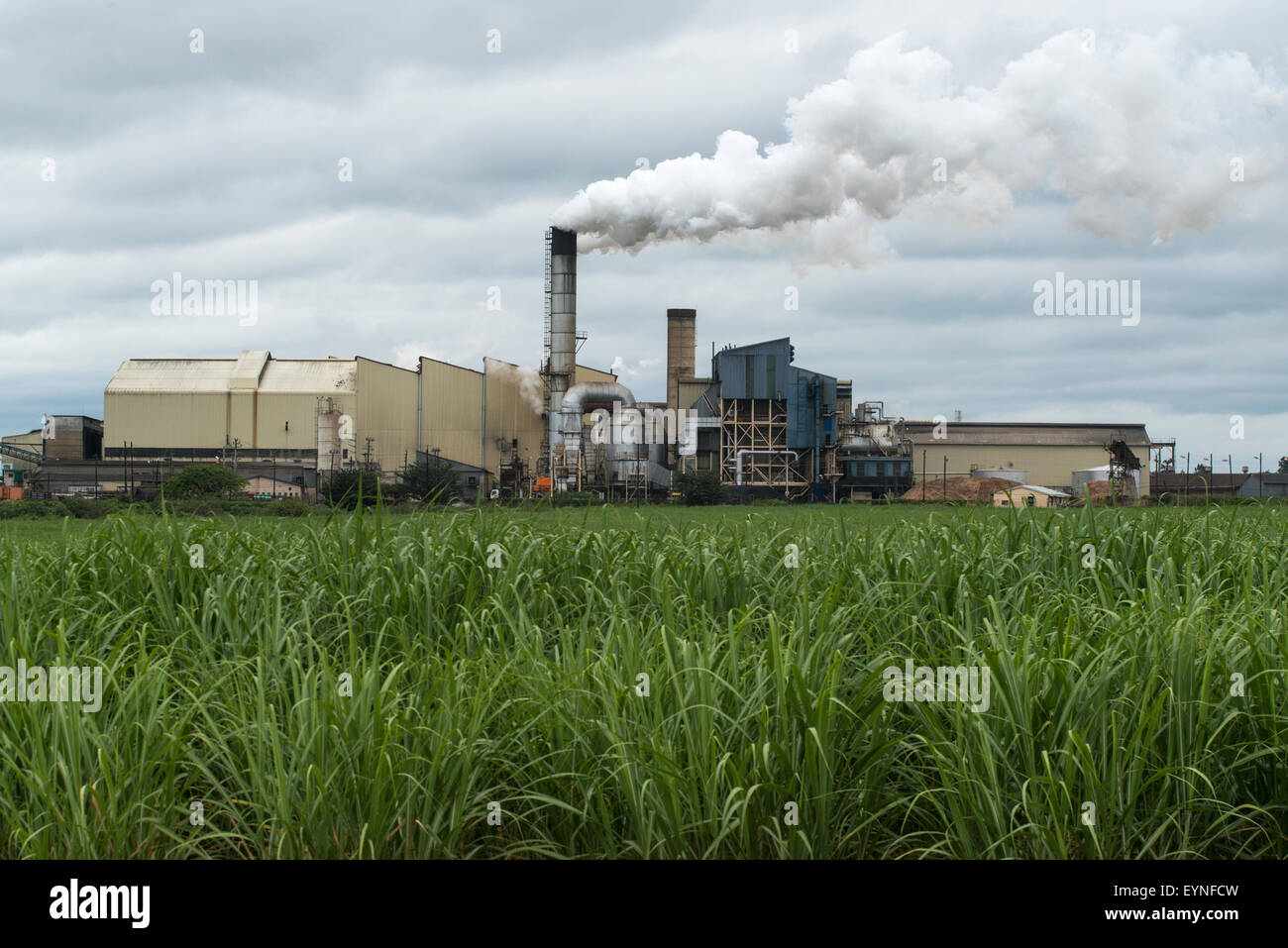 Sugar mill and sugar cane field, Mhlume, Swaziland Stock Photo