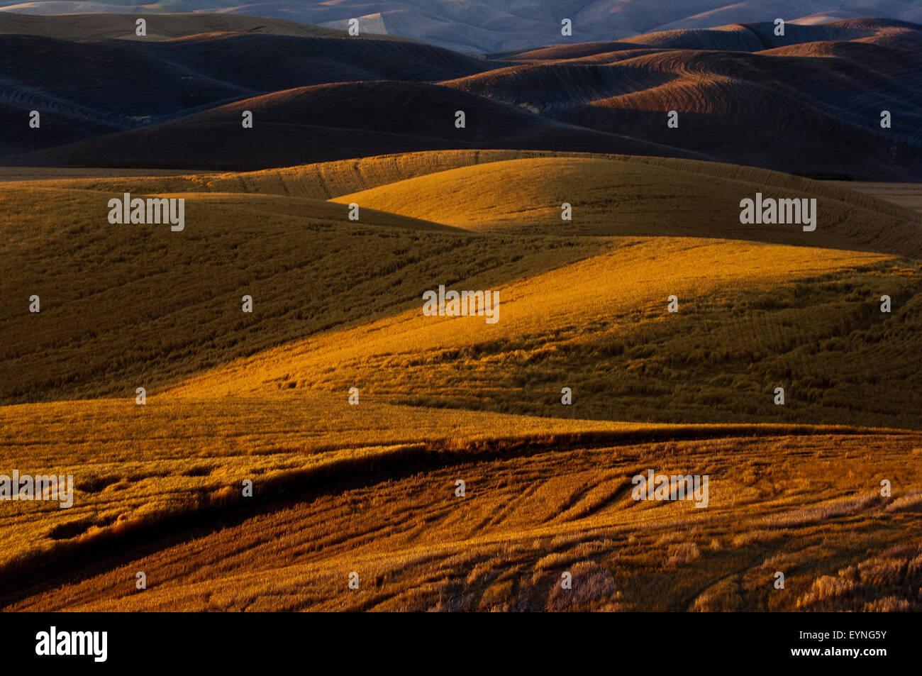Grain fields at sunset in the Paloue region of Washington Stock Photo