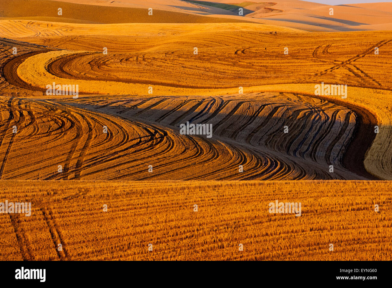 Field of stubble from harvested grain in the hills of the Palouse regiion of Washington Stock Photo