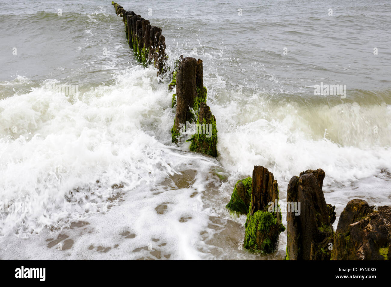 Very old and rotten wooden breakwaters - Stock Image