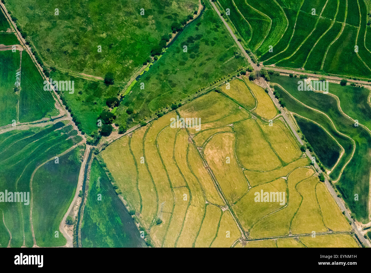 Typical irrigation plans in fields near San Jose, Costa Rica - Stock Image