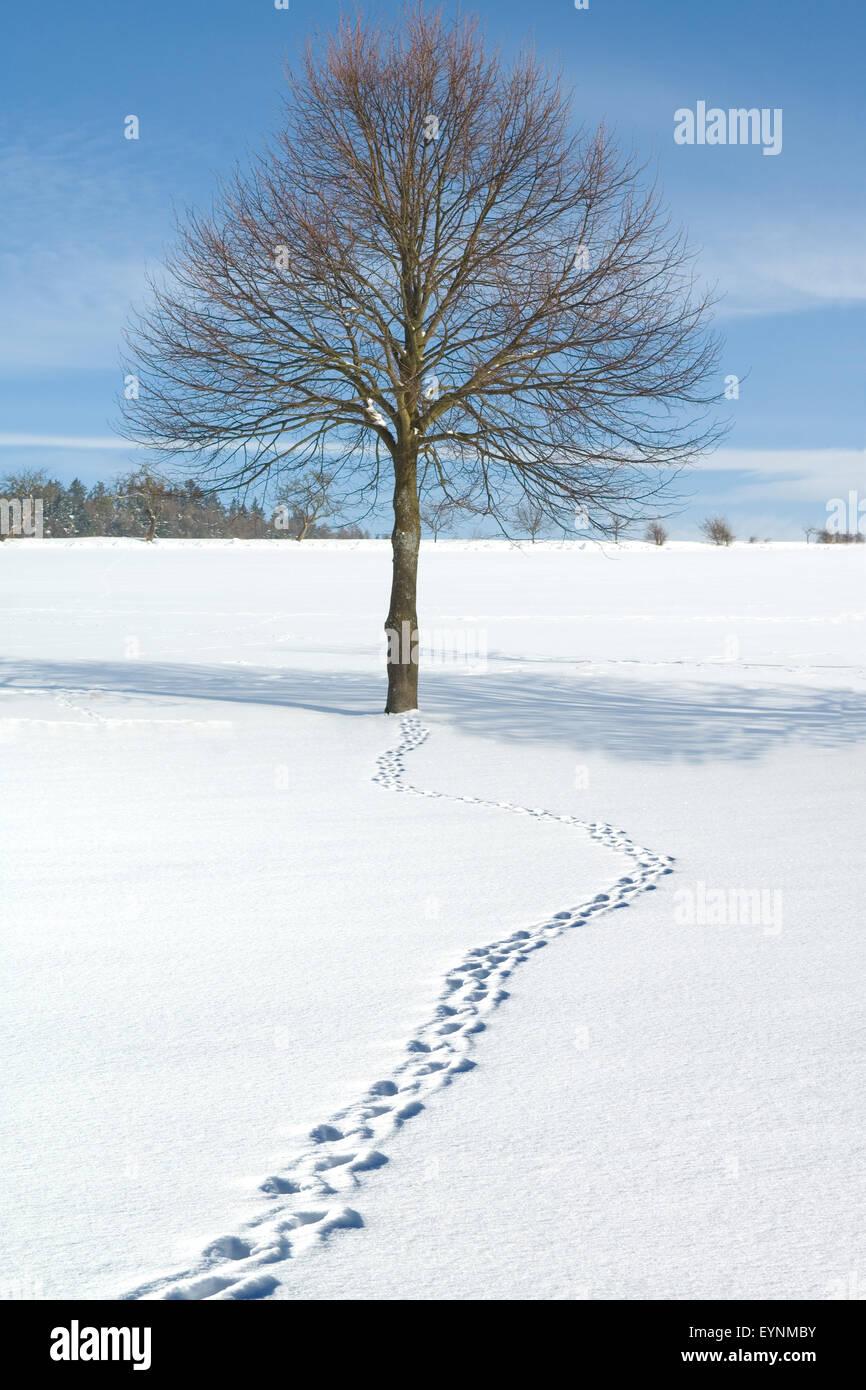 Winterlandschaft, Taunus, - Stock Image