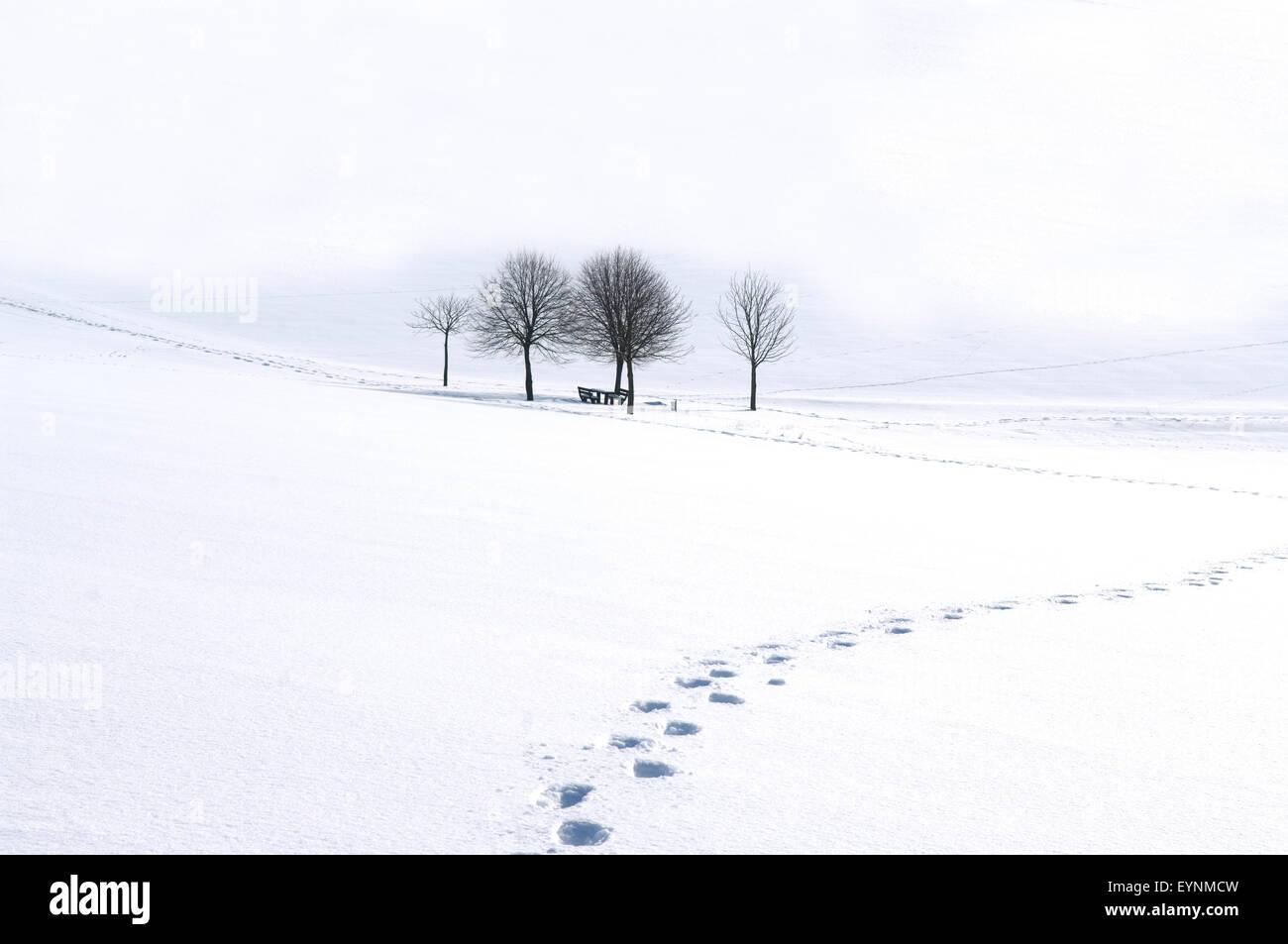 Winterimpression - Stock Image