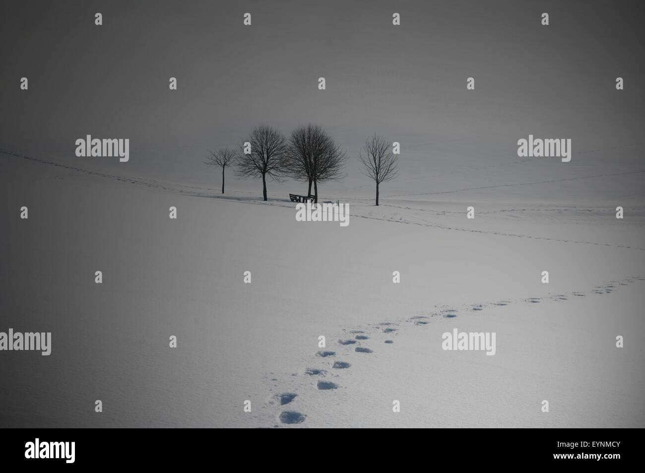 Winterimpression, Baeume, Beleuchtungseffekt - Stock Image