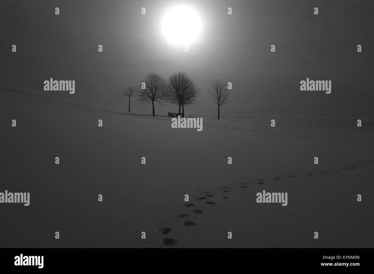 Winterimpression, Nebel, Beleuchtungsfilter - Stock Image