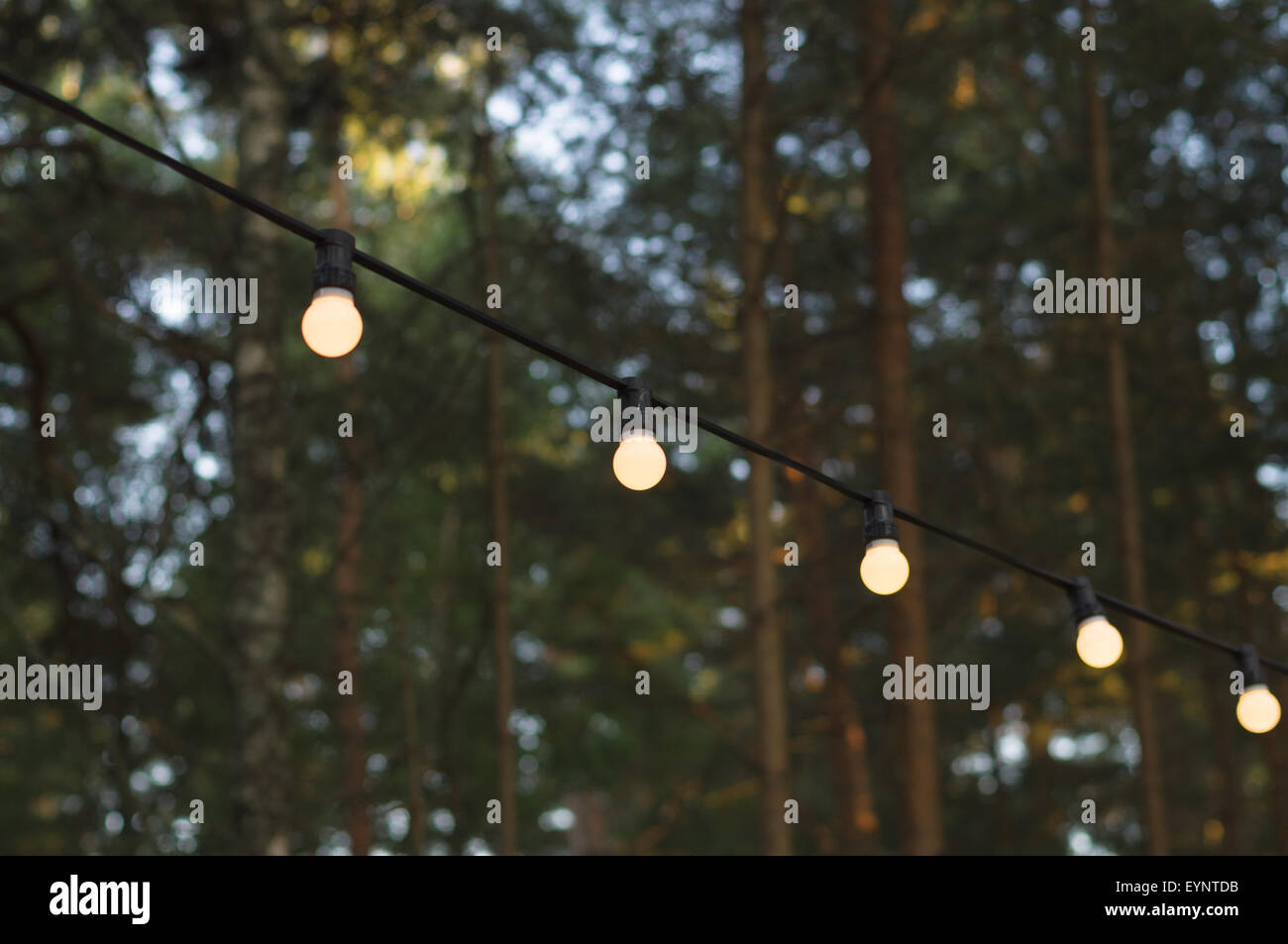 Bulbs On A Wire Stock Photos Images Alamy Lightbulb Learning Wiring Light Against Wood Blurred Background Image