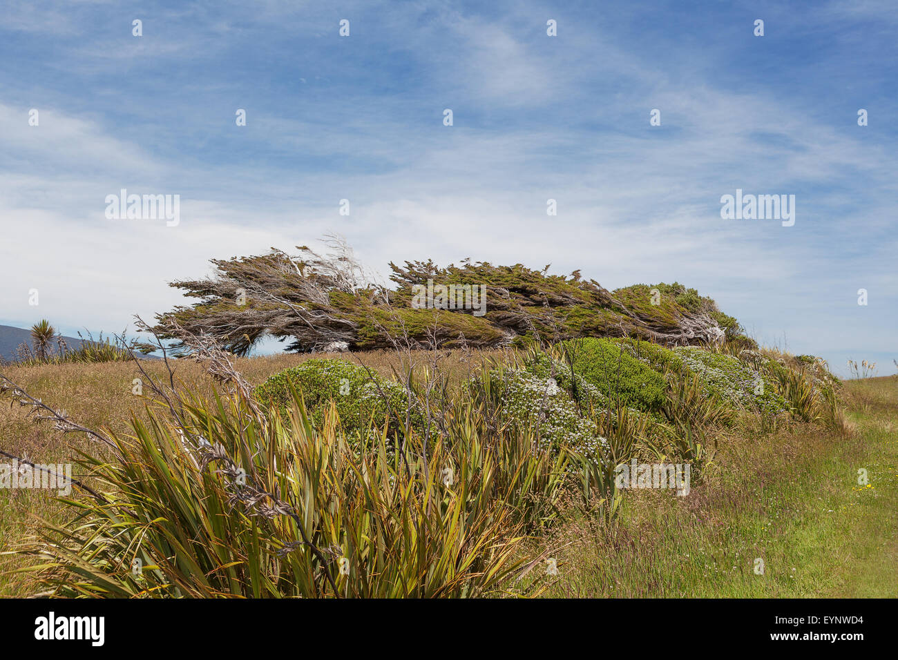 Windswept Trees Grass Stock Photos & Windswept Trees Grass Stock ...