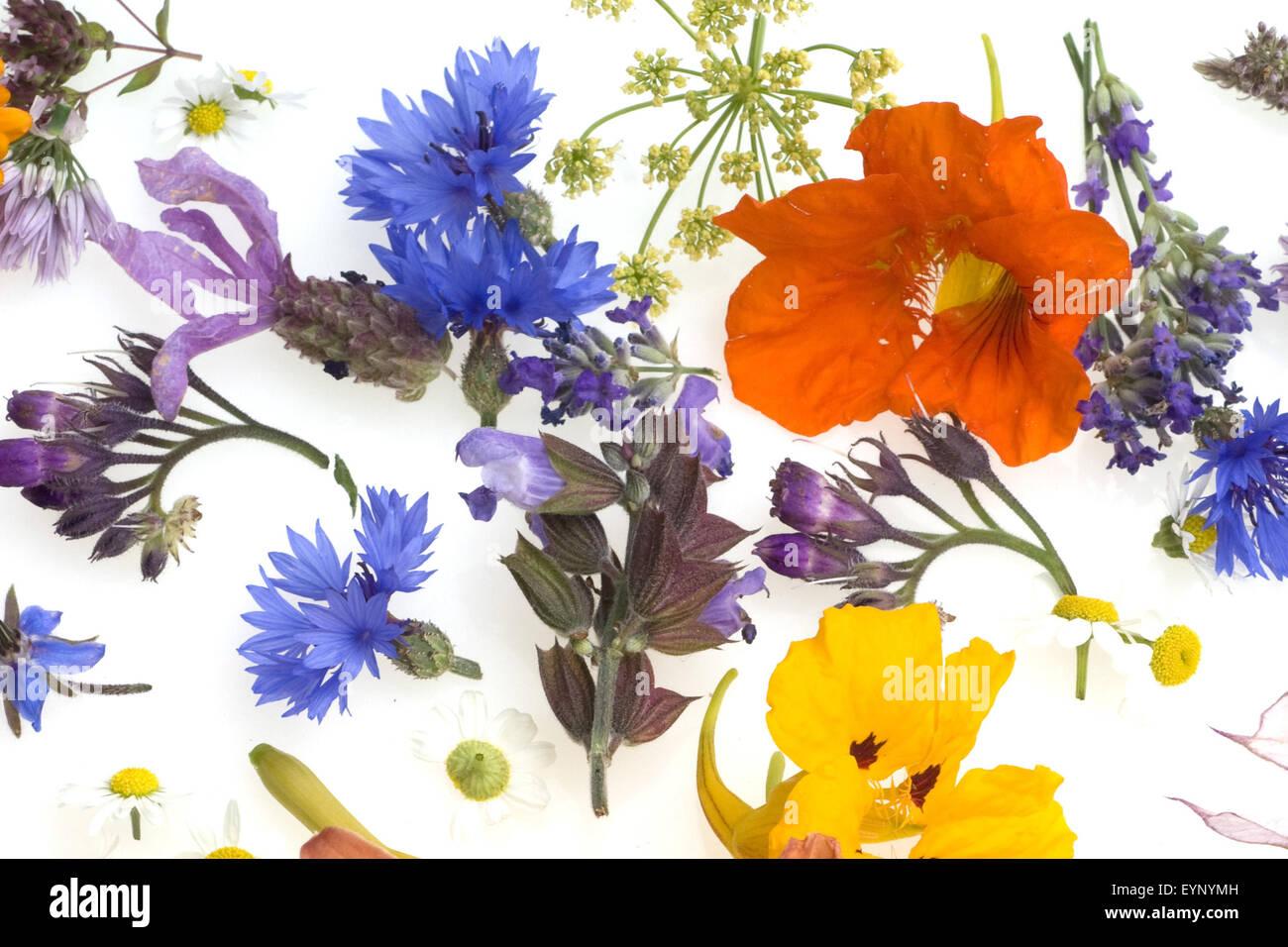 essbare Blueten, Heilpflanzen, - Stock Image