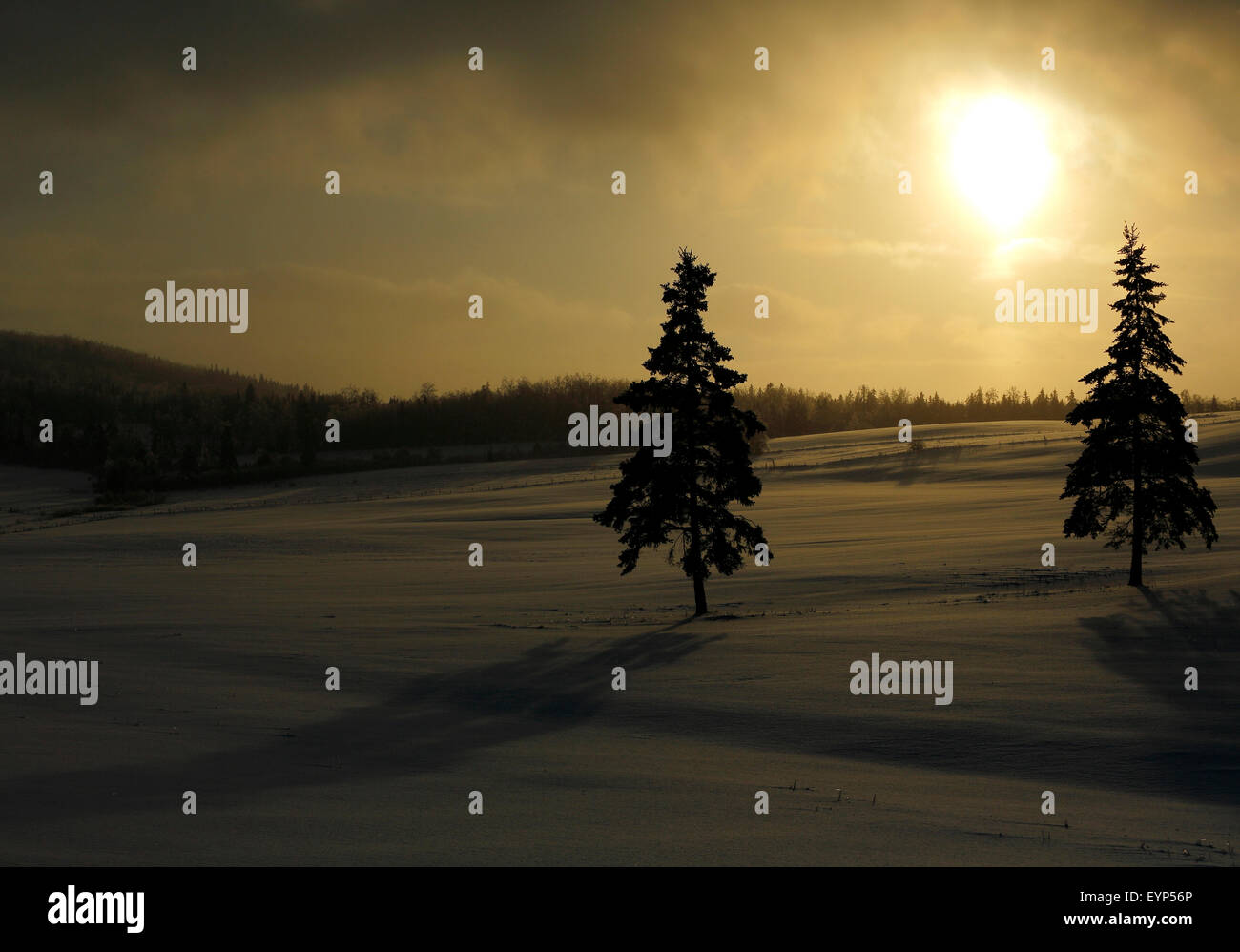 Late afternoon sun and snow shower in New Brunswick, Canada. - Stock Image