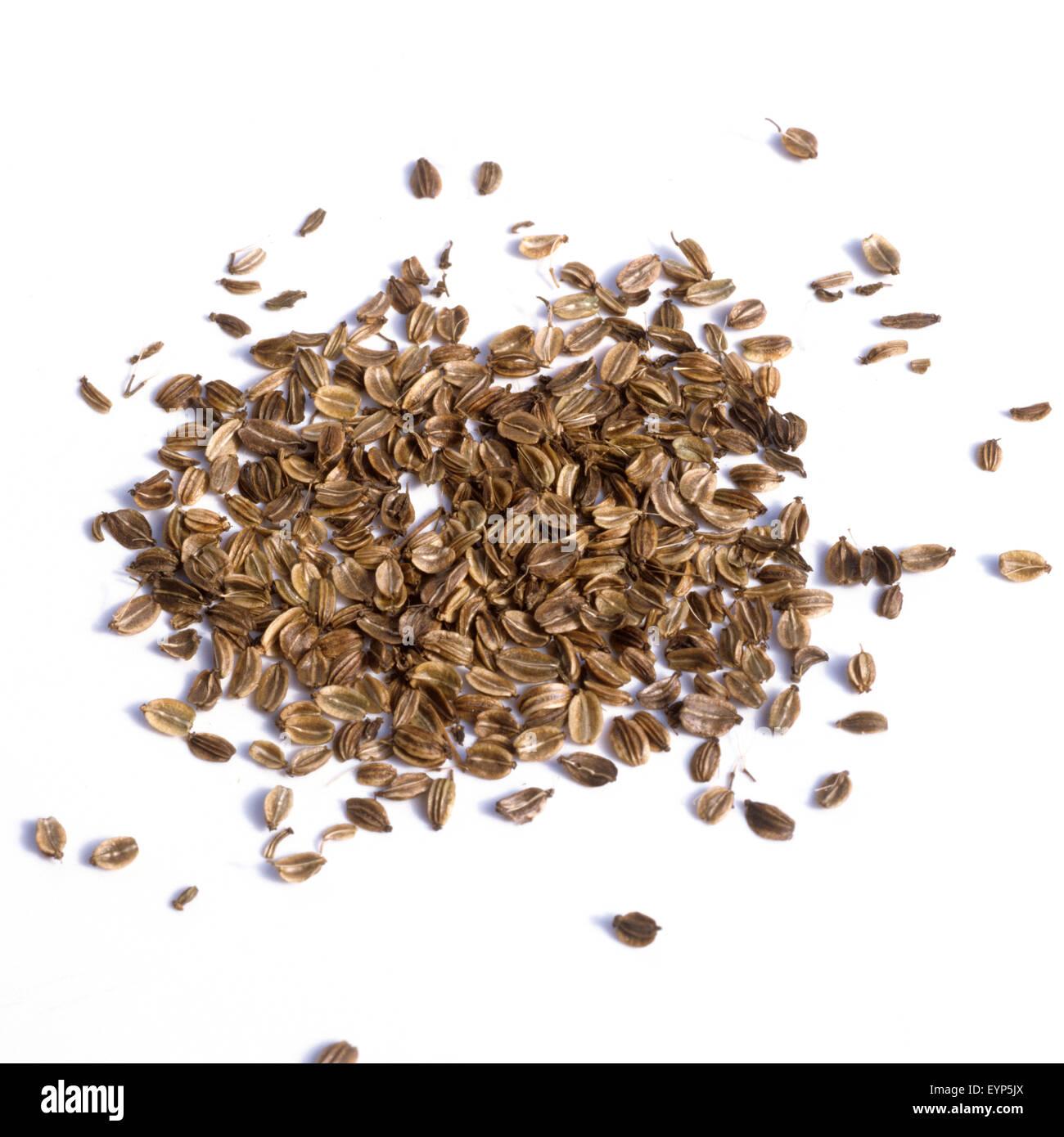 Liebstoeckel; Levisticum officinale; Samenkoerner, Samen, Heilpflanzen, - Stock Image