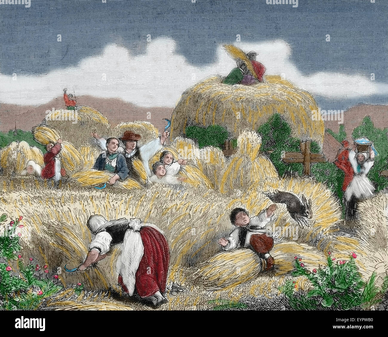 History agriculture. Mowing. Engraving, 19th century. Colored. Stock Photo