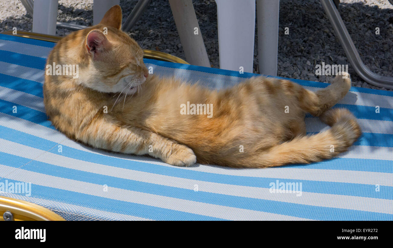 cat reclining on sunbed - Stock Image