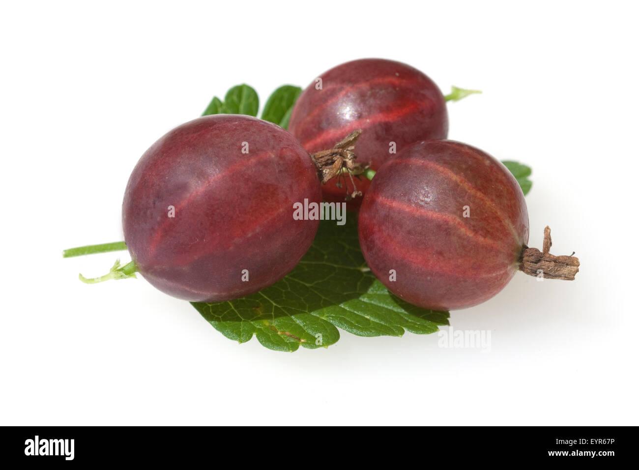 Stachelbeere; Ribes; uva-crispa; Strauch; Wildpflanzen; - Stock Image