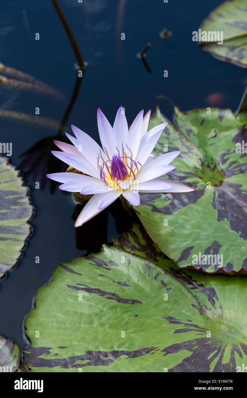Lilypad Stock Photos & Lilypad Stock Images - Alamy