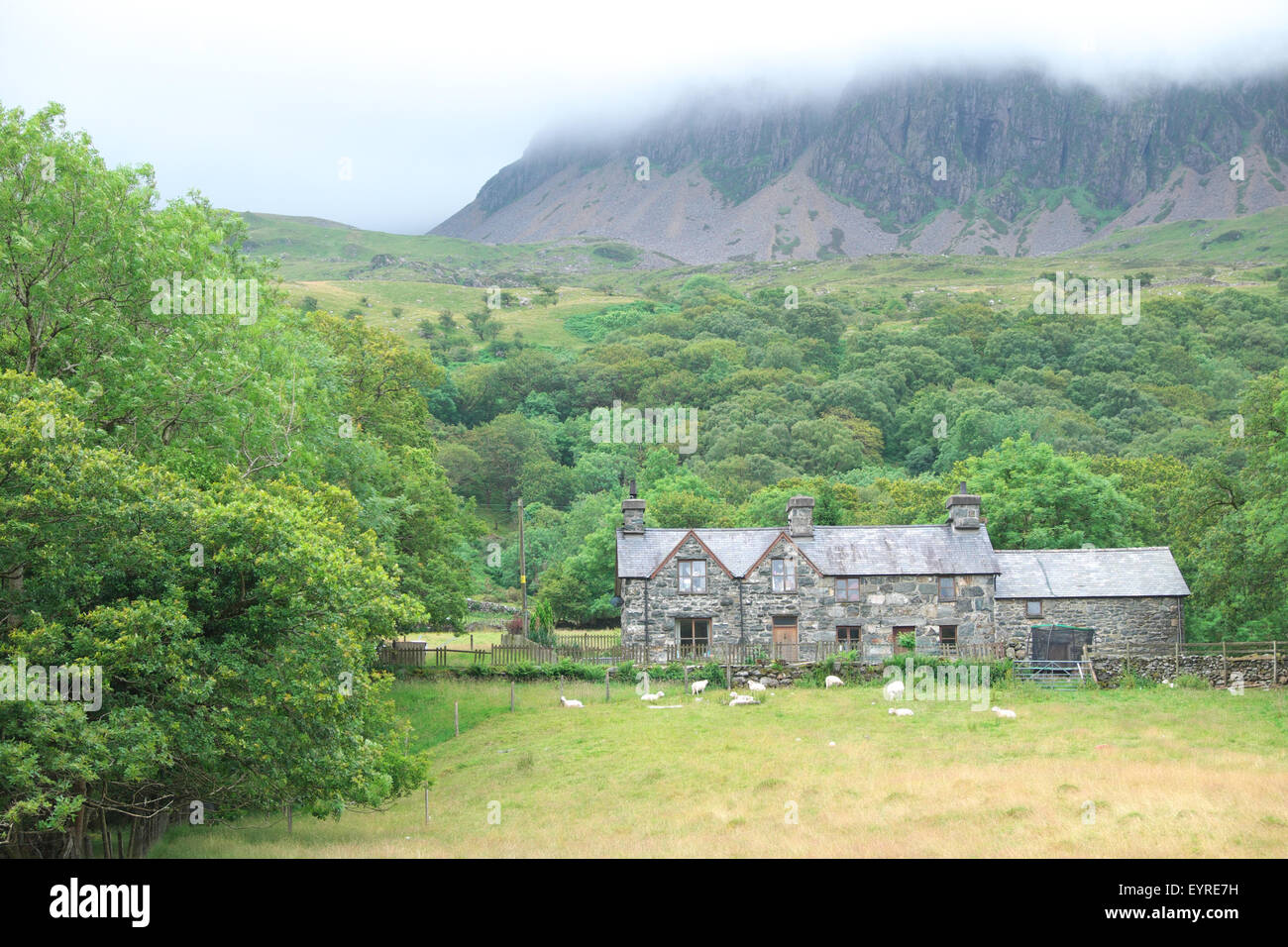 Ty-Nant farm, Cadair Idris, Gwynedd, Wales the farmhouse lies at the start of the Pony Path track at foot of Cader - Stock Image