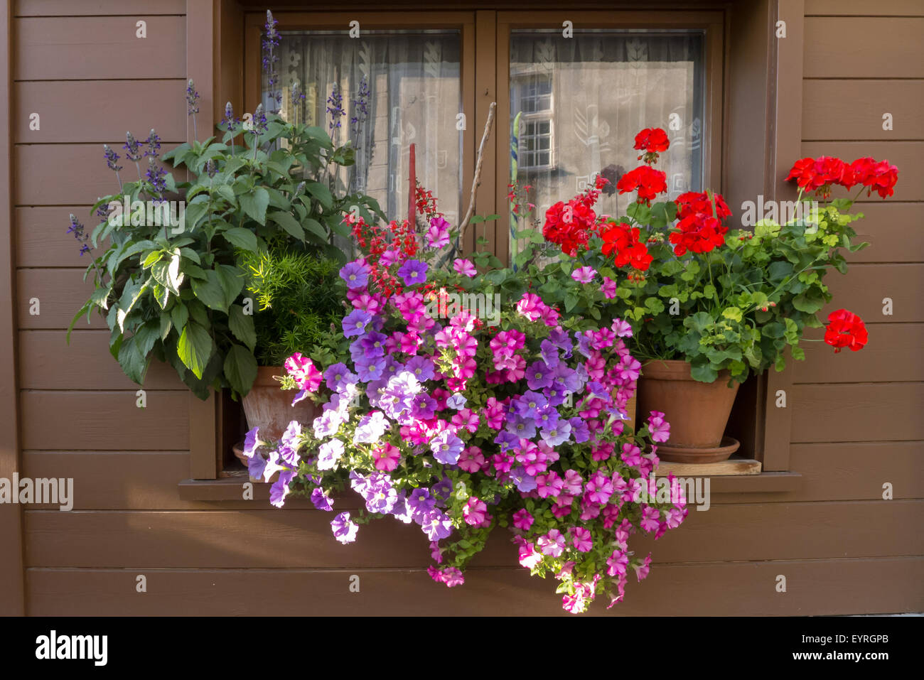 Switzerland. Typical colourful flowers in window box. - Stock Image
