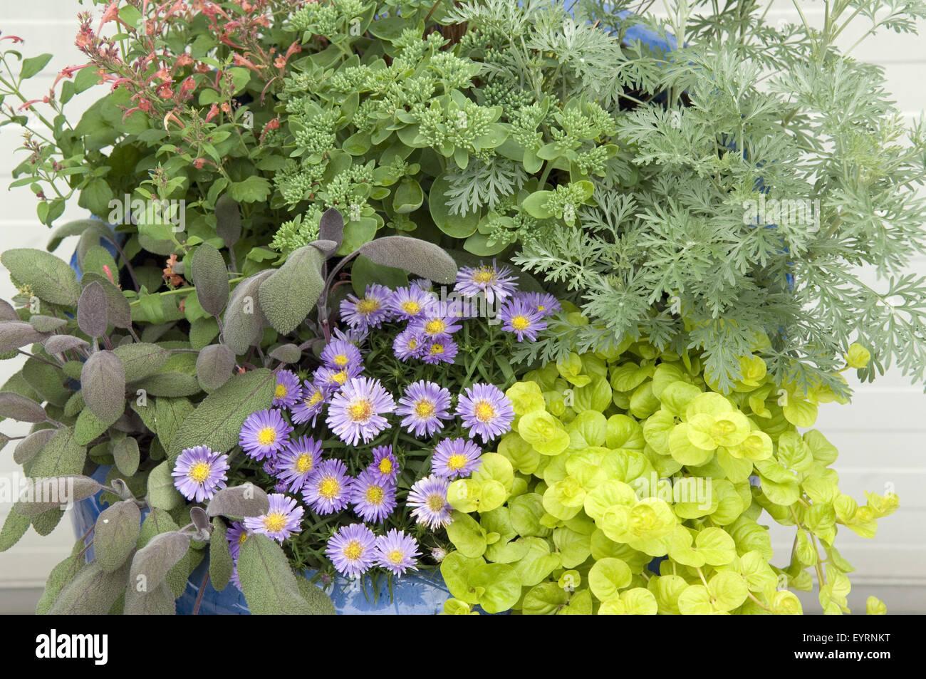 Blumenkuebel Stock Photo