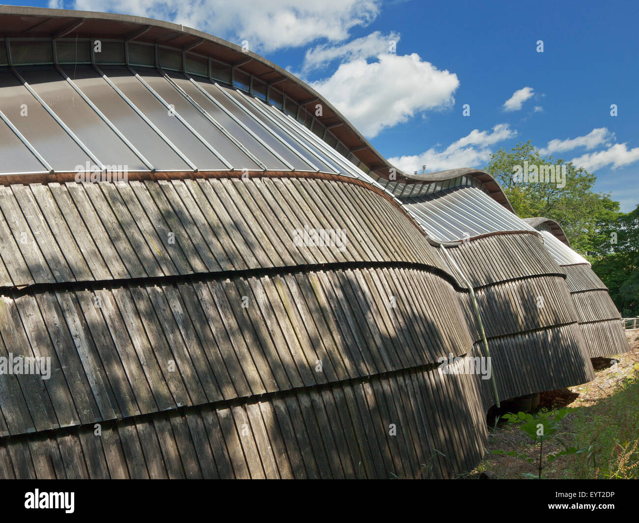 The Gridshell Building at the The Weald and Downland Open Air Museum, Singleton, West Sussex. - Stock Image