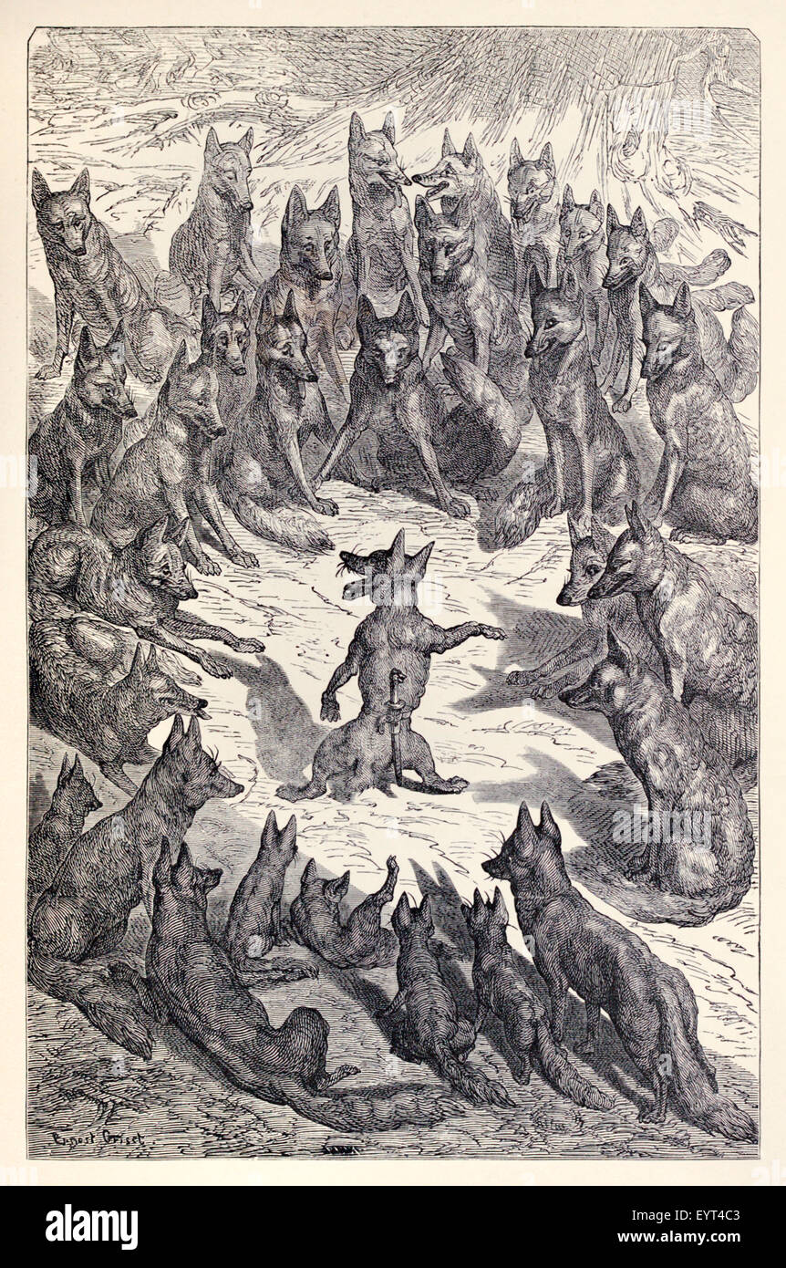 'The Foxes and their Tails' fable by Aesop (circa 600BC). A fox got its tail cut off in a trap and tried - Stock Image