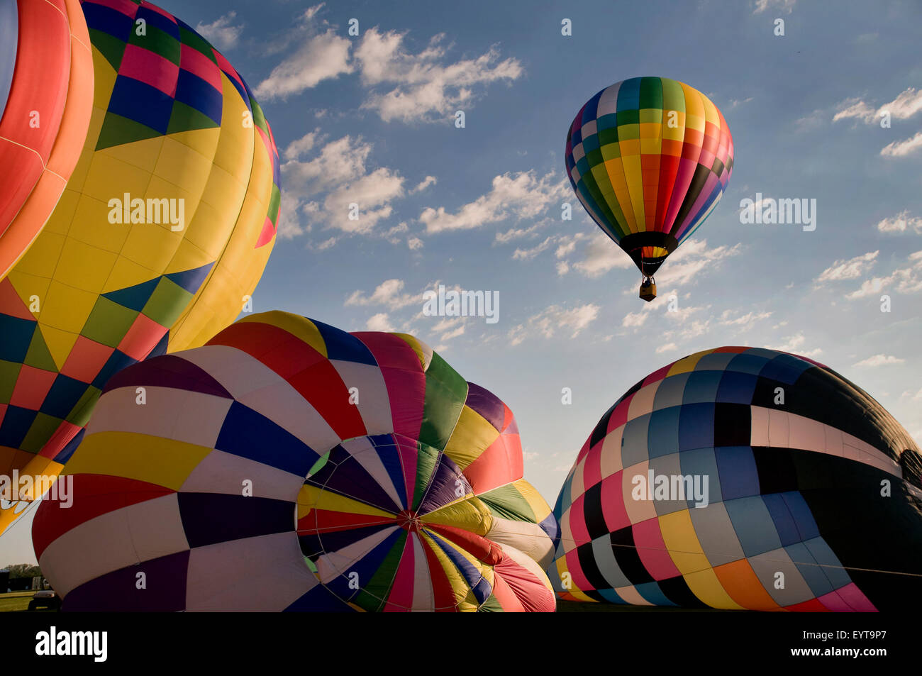 One hot-air balloon ascending above other inflating balloons at a festival. (Readington Balloon Festival) - Stock Image