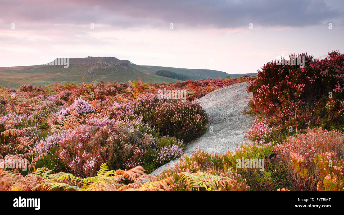 Summer twilight on Burbage Moor near Higger Tor (pictured in the Dark Peak district of Peak District National Park, - Stock Image